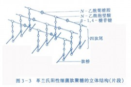 上海交通大学微生物复习笔记知识点